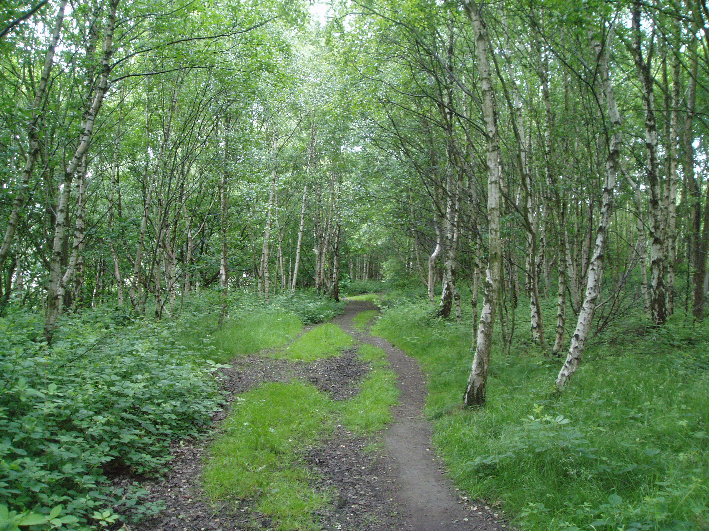 The path through woodland
