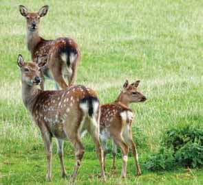 Stainland Deer Park